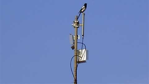 Svraka na anteni
